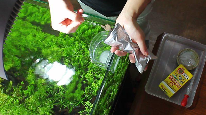 孵化の手順 3.ブラインシュリンプを入れる