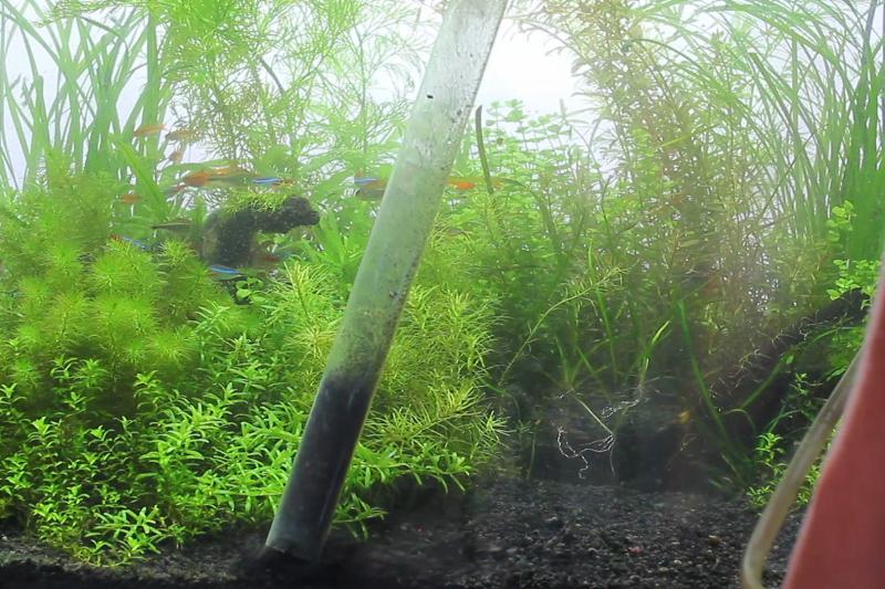 藍藻の予防策