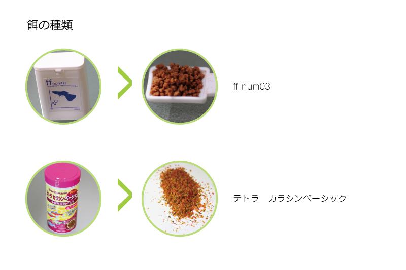 クラウンキリーに与えている餌の種類