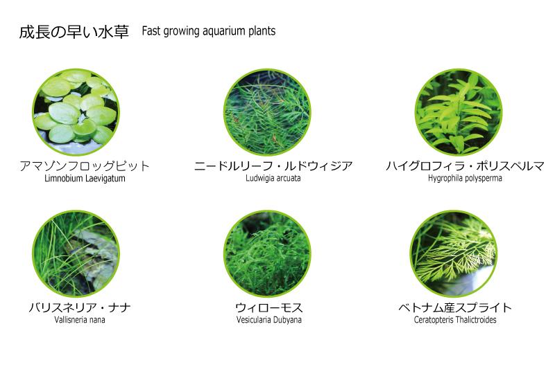 成長の早い水草