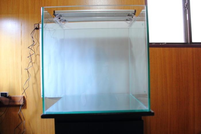 模造紙を貼り水槽内を明るく見せる
