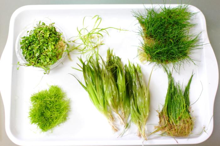 植栽する水草6種類