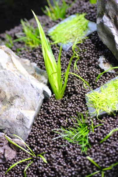 中景にブリクサショートリーフを植栽する