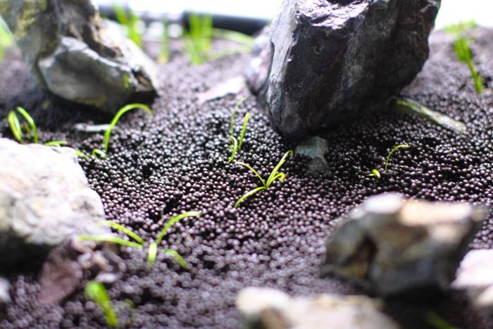 中景から前景にかけてテネルスを植栽する