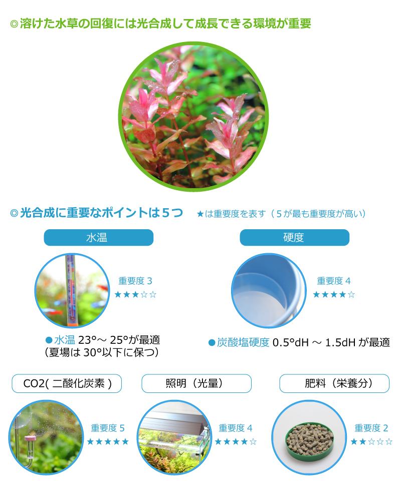 水草の光合成に必要な5つのポイント