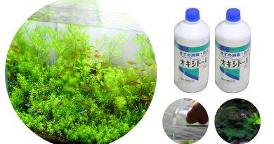 オキシドールでラン藻類の除去とその効果 後編