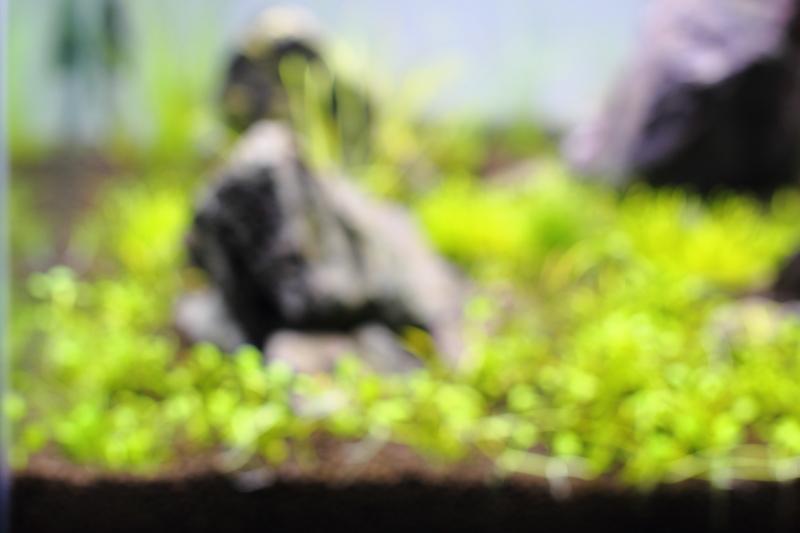石組み草原レイアウト