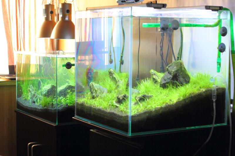 水草水槽の定期水替え