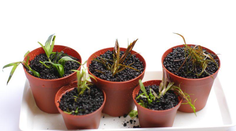植栽部分の比較