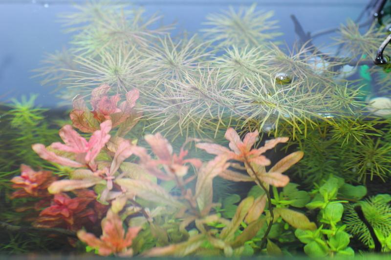 水面に達する有茎草