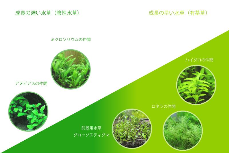 成長の早い水草、成長の遅い水草