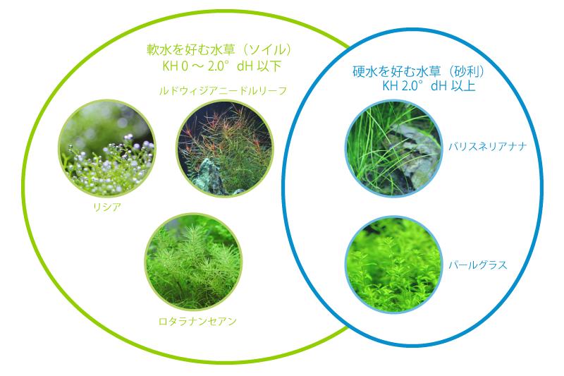 軟水を好む水草、硬水を好む水草
