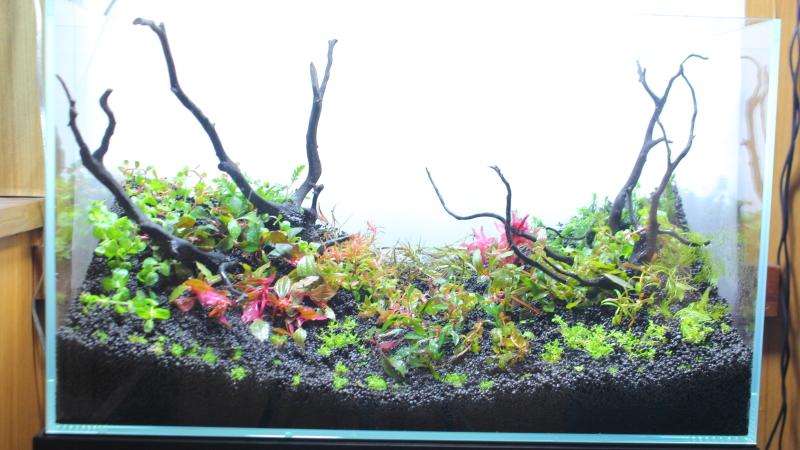 22種類の水草でレイアウトを作る