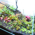 水草水槽をレイアウトを作る