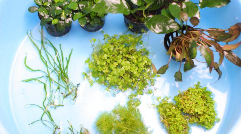 レイアウトに使う8種類の水草