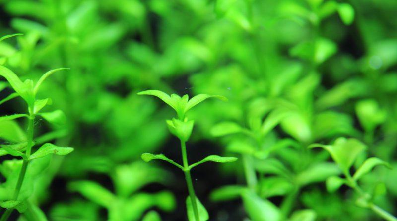 植栽7日目2