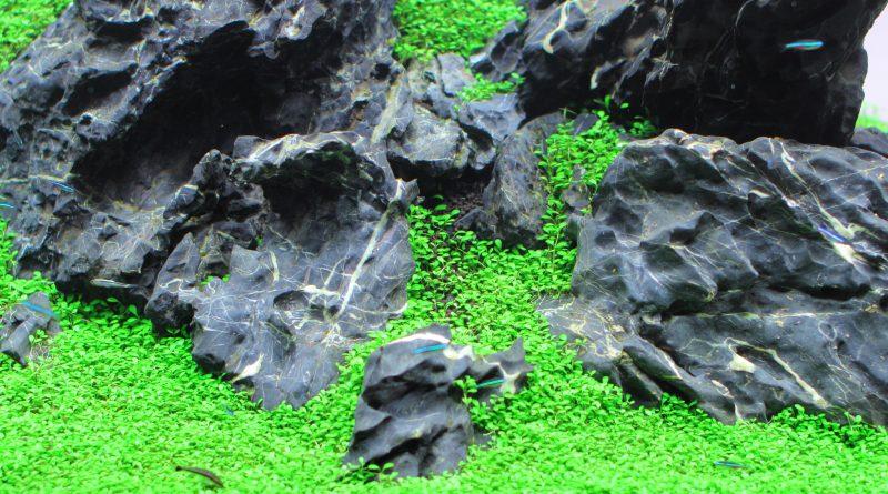 グロッソスティグマを使った石組みレイアウト