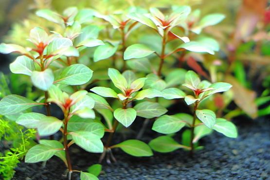 砂利で育成 植栽から1日