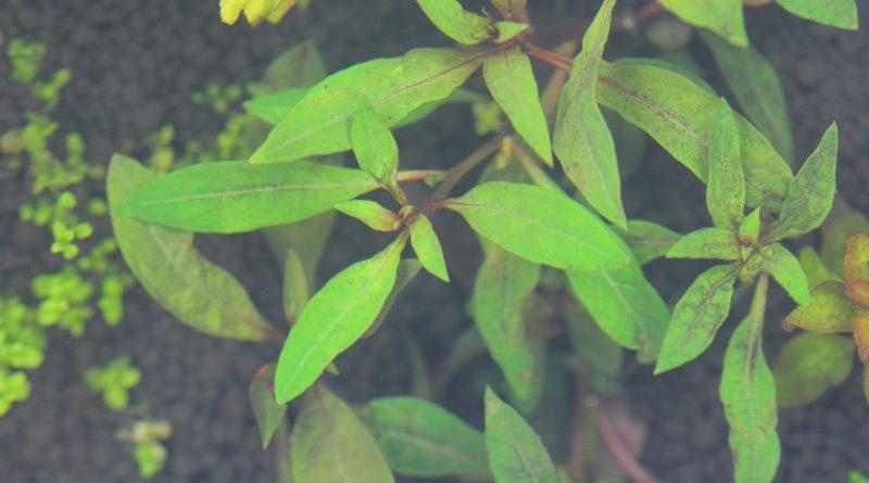 植栽から2日目
