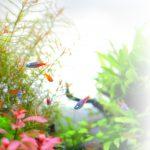 癒し動画 水草と熱帯魚の色