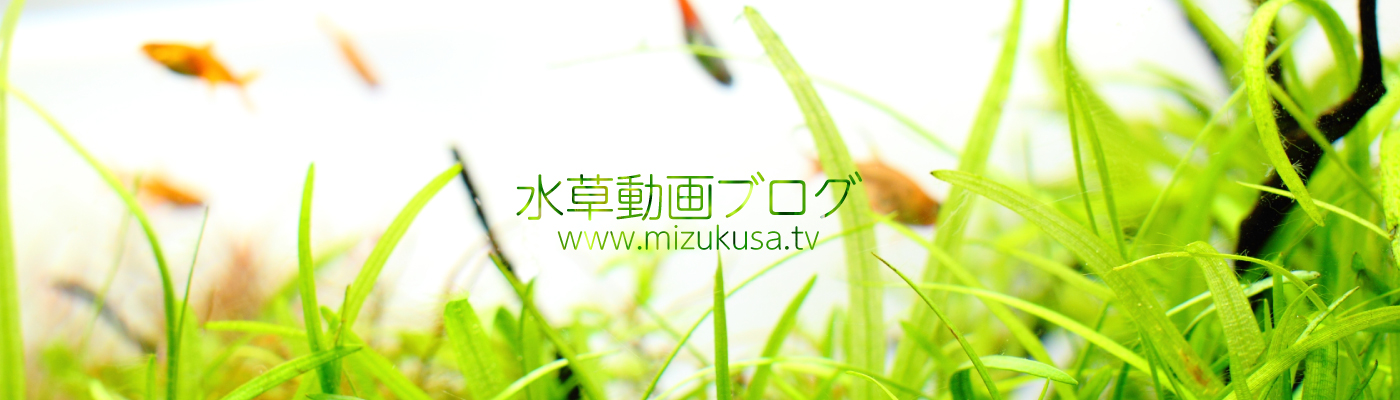 水草動画ブログ