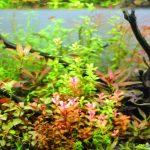 秋の色彩をイメージしたダッチアクアリウム水槽