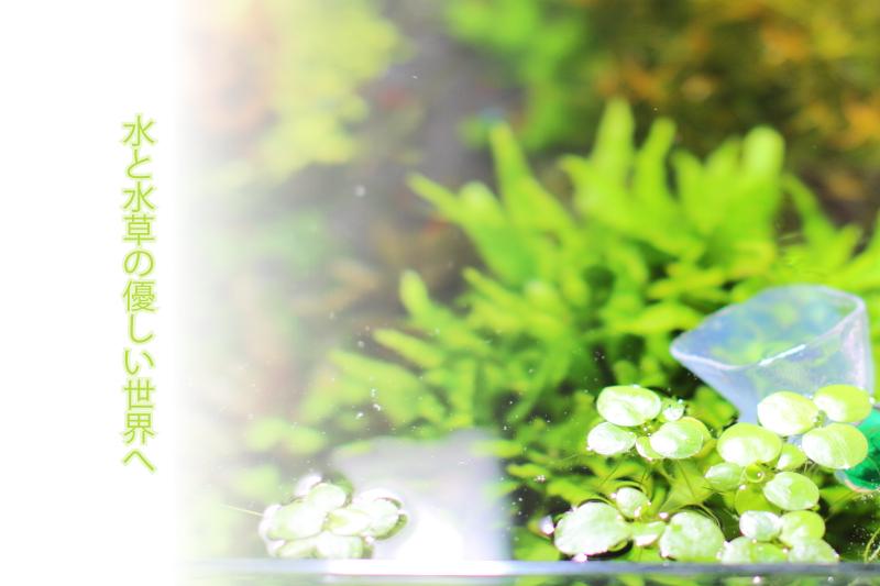 水と水草の優しい世界へ
