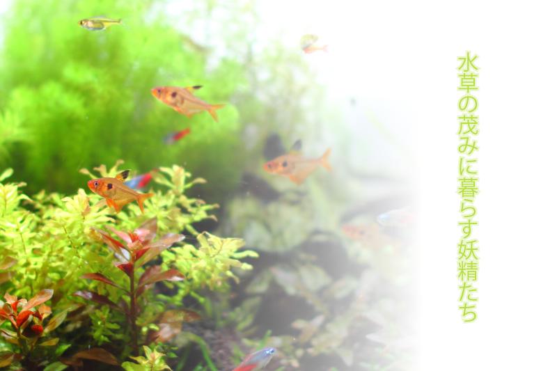 水草の茂みに暮らす妖精たち