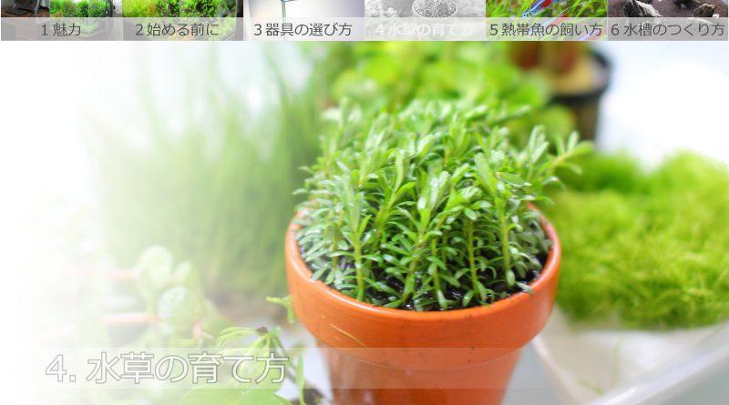 水草の育て方