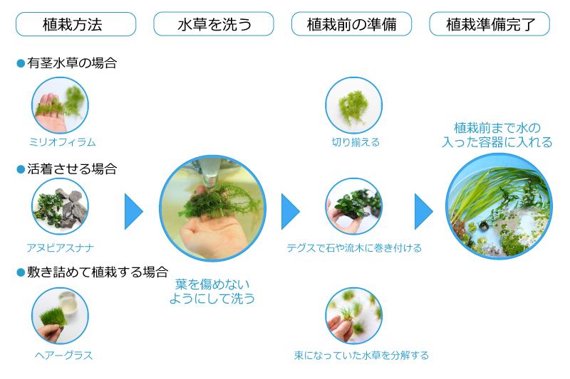 水草の導入方法
