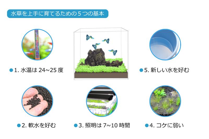 水草を上手に育てるための5つの基本
