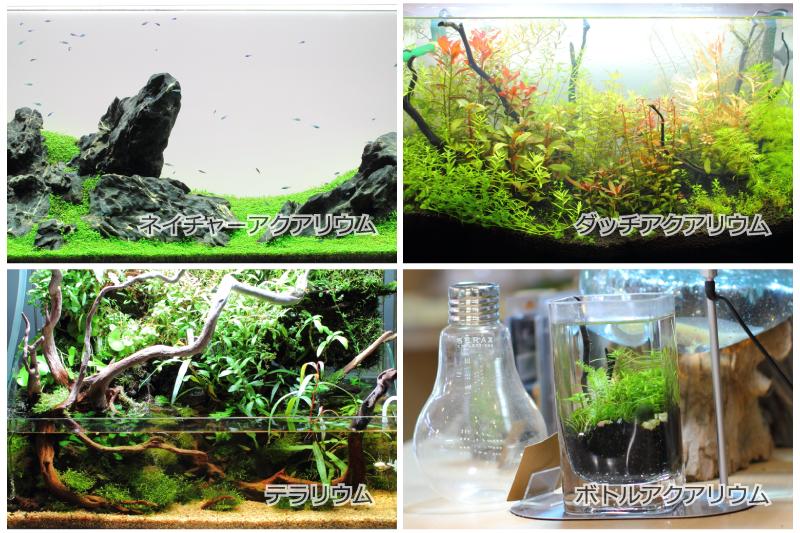 淡水のアクアリウムの種類