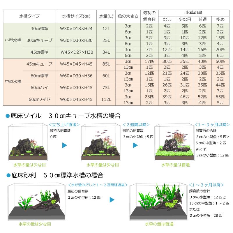 30㎝から60㎝水槽の熱帯魚の飼育できる数