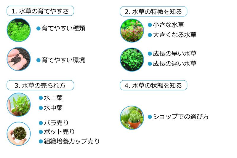水草の選び方