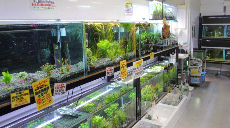 水草コーナー かねだい横浜店