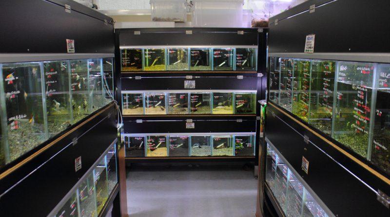 熱帯魚水槽コーナー かねだい横浜店