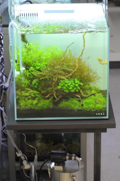 店内展示されていた小型水槽 かねだい横浜店