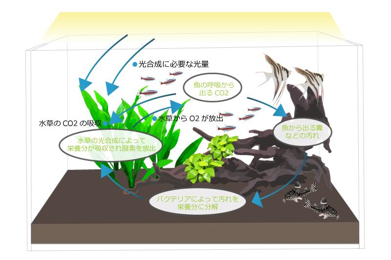 熱帯魚と水草の関係