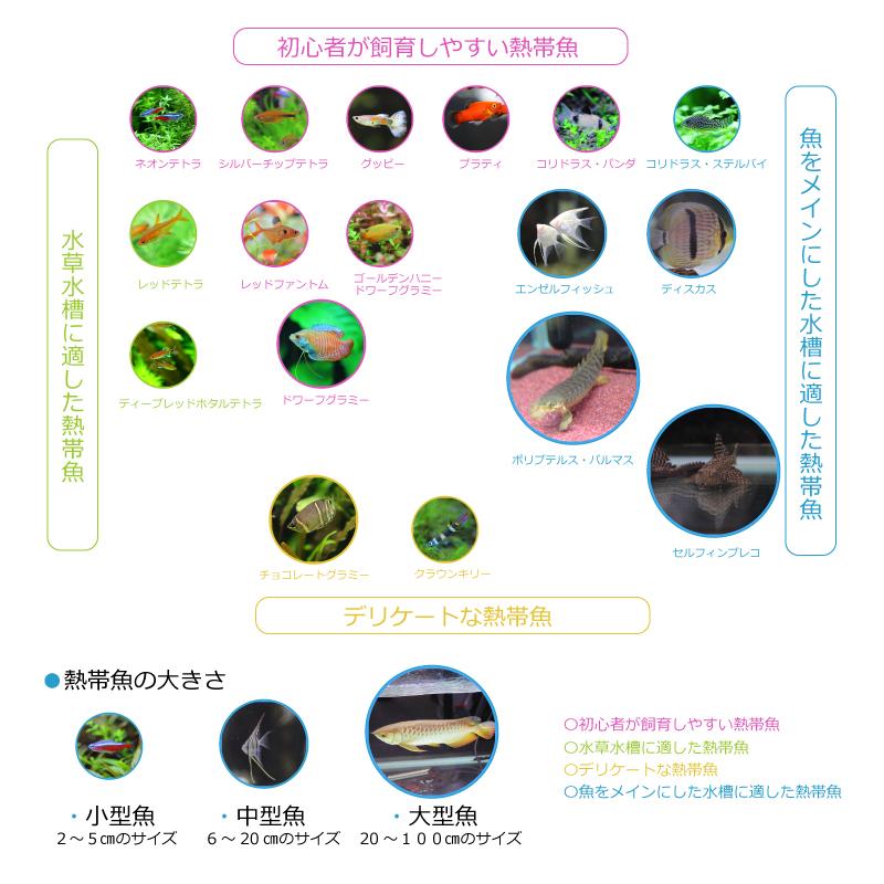 熱帯魚の種類と初心者向け熱帯魚