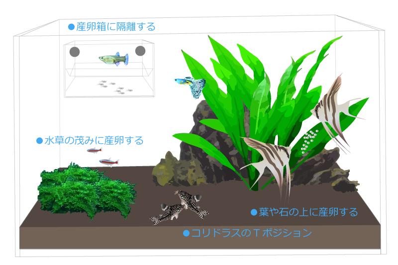 熱帯魚の繁殖方法