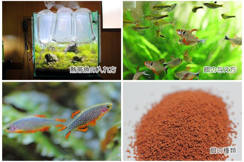熱帯魚の飼い方