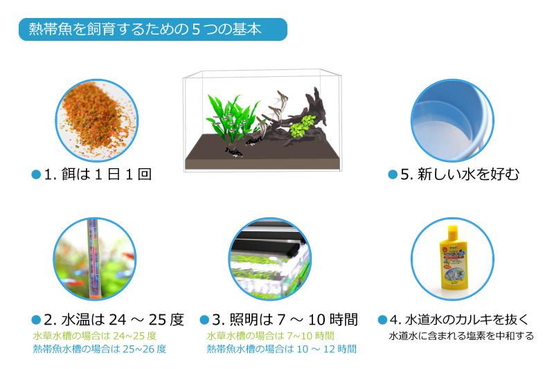 熱帯魚飼育の基本