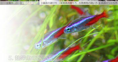 5.熱帯魚の飼い方