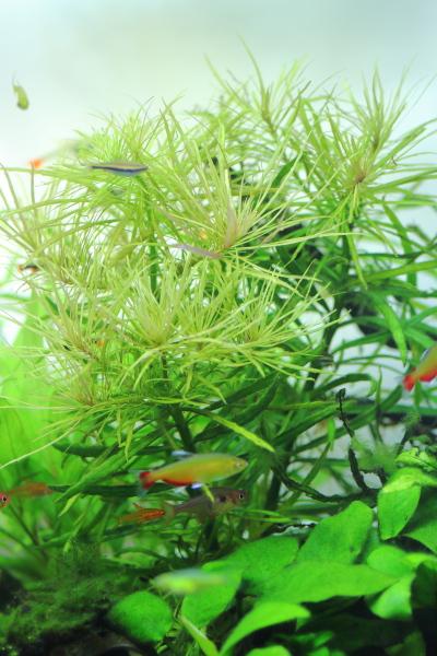 美しいオランダプラントの茂み