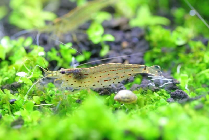 水草・熱帯魚への影響