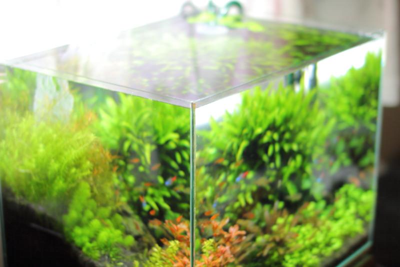 富士砂とRO水を使った水草水槽例