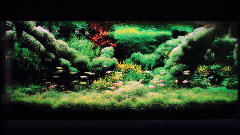 光彩の水辺 90cm水槽
