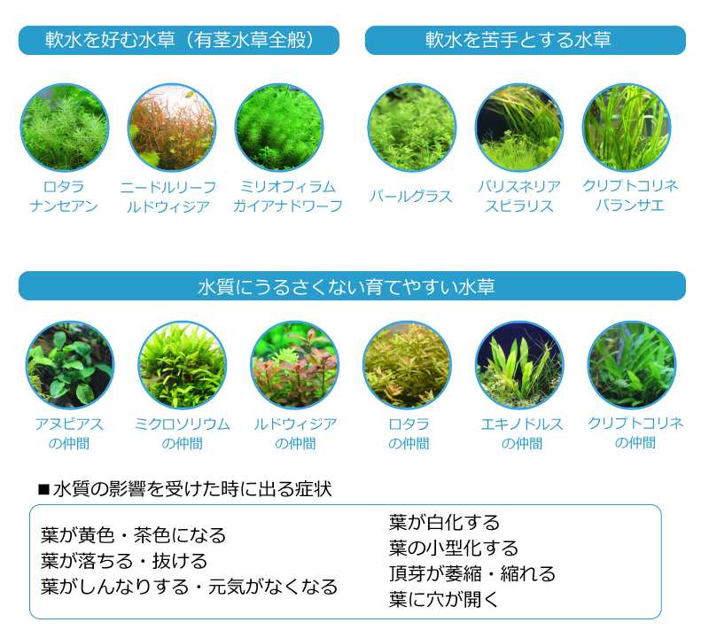 水槽の水質に水草が適応できずに枯れる