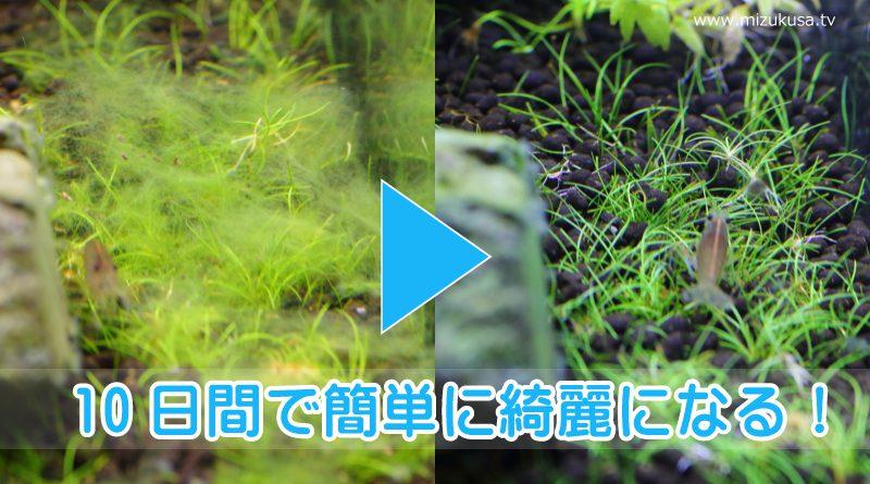 【簡単コケ除去方法】水草を枯らさずに10日間でコケを完全撲滅?!
