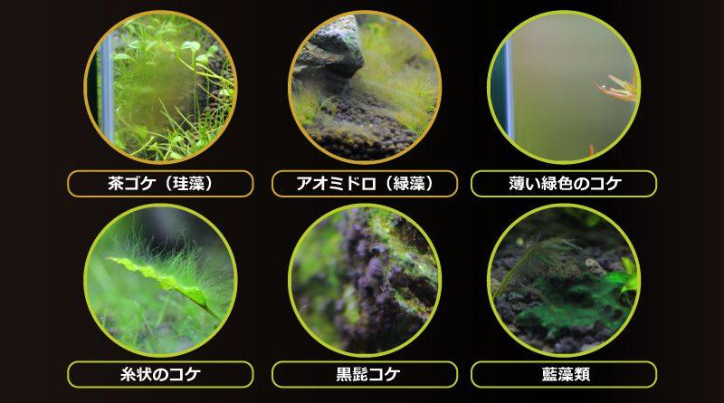 水草水槽・アクアリウムに発生するコケの種類と発生原因